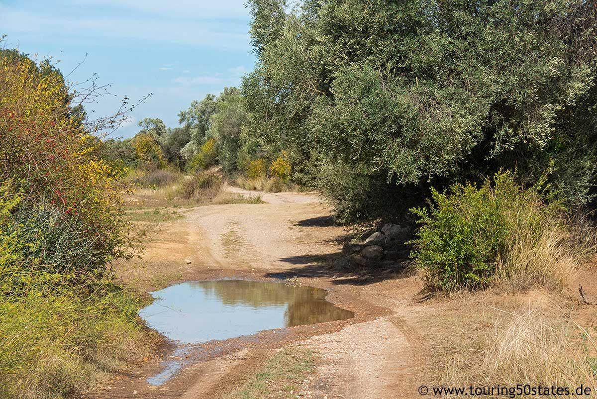 Ein einsamer Feldweg durch Olivenhaine - auf der Suche nach Granatäpfeln